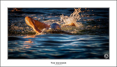 The Swimmer (John_Armytage) Tags: swimmer canon7d2 canon200400f4 canon australia nsw northernbeaches avalonpool littleav tidalpool pool sunrise seascape