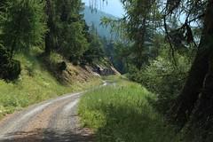 retour  Ausserberg (bulbocode909) Tags: valais suisse rarogne chemins forts arbres nature montagnes vert