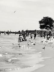 Foster Ave. beach (williamw60640) Tags: chicago lakemichigan beach birds seagulls sand summer water waves tree lifeguardstand swimming umbrella sun wind bird trees pier