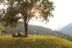 Sun & Tree (sechisara98) Tags: nature ledro green colors sun tree beautiful beauty canon mountain