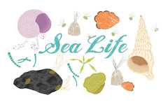 SeaLife (Sonja reuterskild) Tags: illustration sealife seashell childrenbook sea maritim plankton