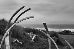 Oregon Coast 7/10 (mfhiatt) Tags: oregon newport coast beach blackandwhite whale bones ribs dscf94180716jpg 100xthe2016edition 100x2016 image57100