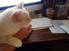 Body Language (I Flickr 4 JOY) Tags: sole cat bodylanguage pest