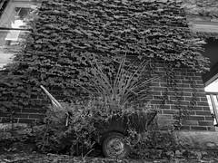 _1020279 (Akiha.) Tags: street blackandwhite old classic