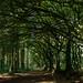 Hembury Forest