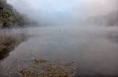 Morning Fog on the Connecticut River (2) (AJ Photographic Art) Tags: autumn canon connecticutriver massachusettsphotographer newengland newenglandphotographer newhampshire ducks fog landscape morning notshotwithmyphone waterscape