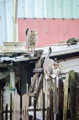 "DSC_5369-2 (Enix Photography) Tags: taiwan taichung travel trip journey life enjoy streetsnap street view landscape nature plant flower blackandwhite animal cat cute dog rhinoceros hippo penguin weasel monkey 小小黑 70200 70200f4 nikon afs nikkor 70200mm f4g ed vr"" nikond7000 d7000 apple n35 nikonafsnikkordx35mmf18g tamron b003 tamronaf18270mmf3563diⅱvc iphone iphone6 bird crow leopard taipei zoo taipeizoo mucha 光復新村 guangfuvillage guangfu village 侯硐 houtong 貓村 淡水 tamsui danshui miaoli sanyi kaohsiung taoyuan 苗栗 三義 高雄 桃園 台中 台北 wufeng 霧峰 nanchuang 南庄"