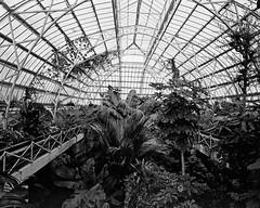 Cunningham House (@fotodudenz) Tags: mamiya7 film rangefinder 43mm super wide angle medium format ilford xp2 christchurch botanic gardens cunningham house canterbury new zealand 2016 bw