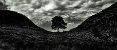 Walk the Wall (Le monde d'aujourd'hui) Tags: hadrianswall northumberland northeastengland roman wall hadrian romans stone silouette blackandwhite sycamoregap tree lonely sycamore