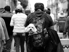 What are you looking at? (J-MoOz) Tags: dog perros fotografia photography photographer art arte blackandwhite photos marcha mascota french eos t3i canon600d