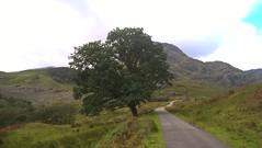 Inveruglas to Loch Sloy (JimGer947) Tags: loch sloy power station dam hydro electric cowal way scotland arrochar tarbet lomondwest highland oak tree lonely lomond inveruglas