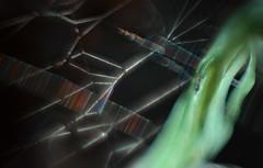 spirit of the web (pete ware) Tags: spiderweb helios40285mmf15 macro extensiontubes peteware photoshopcs5 composite greenspirit