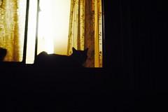 Today's Cat@2016-10-18 (masatsu) Tags: cat thebiggestgroupwithonlycats pentax mx1 osaka