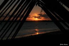 Pr-do-Sol-Serrambi (Carlos Amorim (Camorim10)) Tags: serrambi ipojuca pernambuco nordeste sol sunset praia mar coqueiro