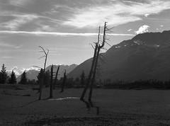 Girdwood, Alaska 2 (cobbu2) Tags: bronica etr 75mm f28 mc zenzanon kodak 320txp txp