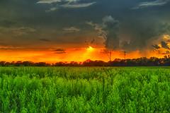 Wetlands glow (Kansas Poetry (Patrick)) Tags: wetlands bakerwetlands wakarusawetlands lawrencekansas lawrenceks patrickemerson patricklovesnancy