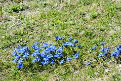 DSC_3465 (d90-fan) Tags: rauris raurisertal natur alpen salzburgerland österreich nationalpark npht hohe tauern wandern krumltal seidlwinkeltal