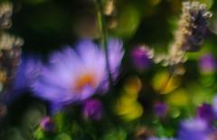 Bokeh Bouquet (EXPLORED) (Katrina Wright) Tags: dsc3550 bouquet bokeh colour