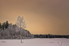 Frosty Birch Tree On A Snowy Field (k009034) Tags: 500px winter copy space finland matkaniva oulainen outdoors birch clouds cold frost frozen ice landscape loneliness nature no people rural sky snow trees teamcanon