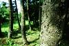 DSC02648 (Nai.) Tags: sonyrx100 taiwan taichung asia nature plants trees treeporn green greenness pine pinewoods lights shades