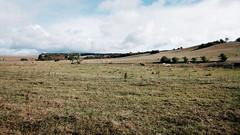 (frollein2007) Tags: brandenburg uckermark herbst montana zappa dentalflosstycoon landschaft