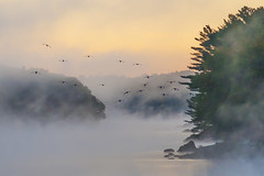 First frost Damariscotta_ (jm atkinson) Tags: purple geese damariscotta river maine fall mist dew fog autumn birds sunrise