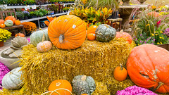 Autumn display at Landscape Garden Centers (Jerry7171) Tags: trees landscapegardencenters flowers plants siouxfalls lincolncounty southdakota autumn roses horticulture unitedstates us