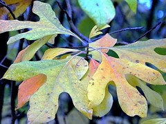 Where color follows color follows color...the forest in Autumn (Lana Pahl / Country Star Images) Tags: catchycolors colorsofflickr autumncolors autumnseason foreverautumn colorsoftheworld