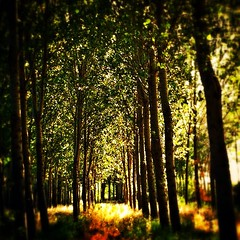 El bosque profundo #len #castilla #bosques #naturaleza (AsturIphone) Tags: naturaleza le castilla bosques uploaded:by=flickstagram instagram:photo=2359589172388480718026757 instagram:venue_name=valenciadedonjuan instagram:venue=4069918