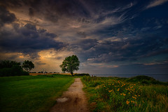 Tree (radonracer) Tags: ostsee coast germany deutschland baum tree clouds landscape