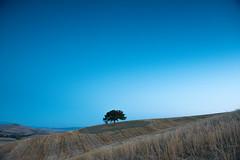 Tree (marco soraperra) Tags: nikon nikkor landscape tree hill grass sky blue summer toscana tuscany italia valdorcia