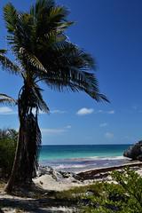 Tulum (Araceli San Martin) Tags: tulum ciudad maya muralla ruinas playa mar azul paraiso mejor vista