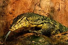 Acuario Agosto 2016 (72) (Fernando Soguero) Tags: acuario zaragoza acuariodezaragoza aragn turismo aquarium nikon d5000 fsoguero fernandosoguero