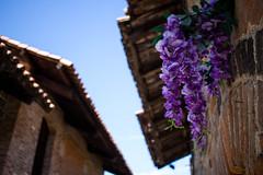 Flowers (M. Drago) Tags: flower flowers fiori fiore viola violet blue blu biella ricetto candelo piemonte piedmont italy brick bricks mattone mattoni red rosso summer estate