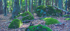 Deep forest (JanBures_com) Tags: forest nature stones trees cold