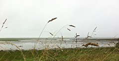 8023 Grasses and mudflats (Andy panomaniacanonymous) Tags: 20160811 cymru forydbay ggg grasses photostream wales