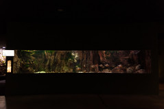 Acuario Agosto 2016 (59) (Fernando Soguero) Tags: acuario zaragoza acuariodezaragoza aragn turismo aquarium nikon d5000 fsoguero fernandosoguero