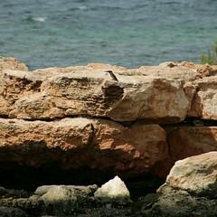 Eisvogel, NGIDn1611491285 (naturgucker.de) Tags: ngidn1611491285 naturguckerde eisvogel utm2531s05004350 cguidoleisering