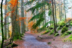 Hermitage Walk (eric robb niven) Tags: ericrobbniven scotland autumn trees hermitage landscape dunkeld perthshire forest