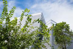Upward view of Nakamachi Terrace (なかまちテラス) (christinayan01) Tags: library tokyo architect building sanaa kazuyo sejima perspective