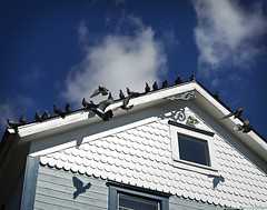 The Birds! (mjardeen) Tags: sony a7ii a7m2 mirrorless tacoma wa washington sky clouds minolta50mm14rokkorpg minolta 50mm 14 rokkorpg standard house birds pigeons flight wings shadows on1effects on1