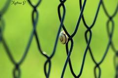 Happy fence Friday! HFF! (martinap.1) Tags: hff happy fence fenced friday freitag zaun nikon