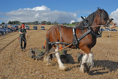 Forestry Working Demo -  Working Horses Day 2016 (john_mullin) Tags: scotland scottish british horse hoses workinghorses heavyhorses clydesdale farm farming agriculture indaysgoneby horsepower teamwork animals cultivation harvest ploughing britishhorsesociety collessie fife
