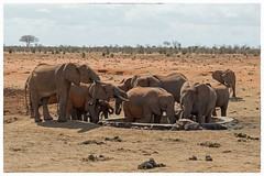 Red Elephants. (Echo Charlie Three Zero) Tags: nikond610 tsavoeast kenya2016 redelephants elephants kenya elephant