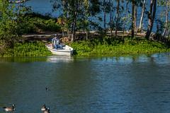 Back to the dock (randyherring) Tags: ca california goose canadagoose vasonalakecountypark nature losgatos afternoon santaclaracountyparks park lake recreational outdoor brantacanadensis unitedstates us