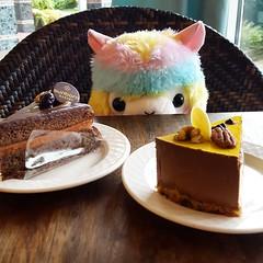 Nom Cake! (SpicaNio) Tags: alpacasso stuffedtoy plushie amuse amusejapan rainbow rainbowalpacasso