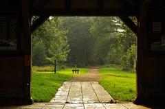 Gateway to Autumn (Sundornvic) Tags: woods trees autumn light shadows green paths ways park