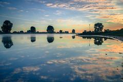 Marbled (Ingeborg Ruyken) Tags: 2016 500pxs empel maas meuse birds bomen dawn dropbox flickr morning natuurfotografie ochtend river rivier summer sunrise trees vogels water zomer zonsopkomst