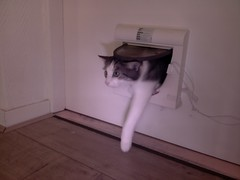 20161017-121414-i-1 (Catflap central) Tags: cat catdoor katzenklappe raspberry pi camera cats catflap kattenluik catflapj2nnl pet meow