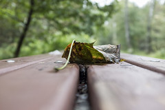 Autumn Begins (Igor Voller) Tags: moscow russia autumn fall leaf dead wood forest park bench trees green brown moskau russland braun holz baum herbst